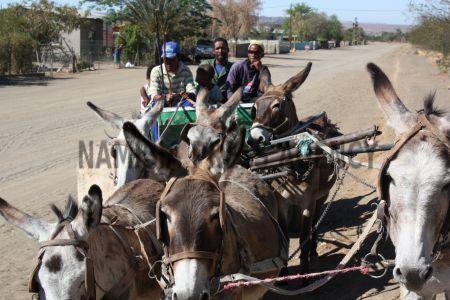 Omatjete man dies in donkey cart accident